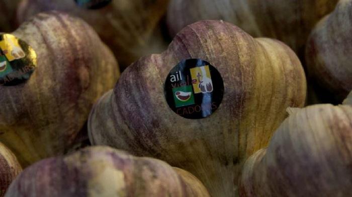 логотип фіолетового часнику з Кадура