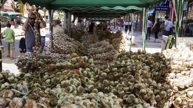 Argentine garlic02