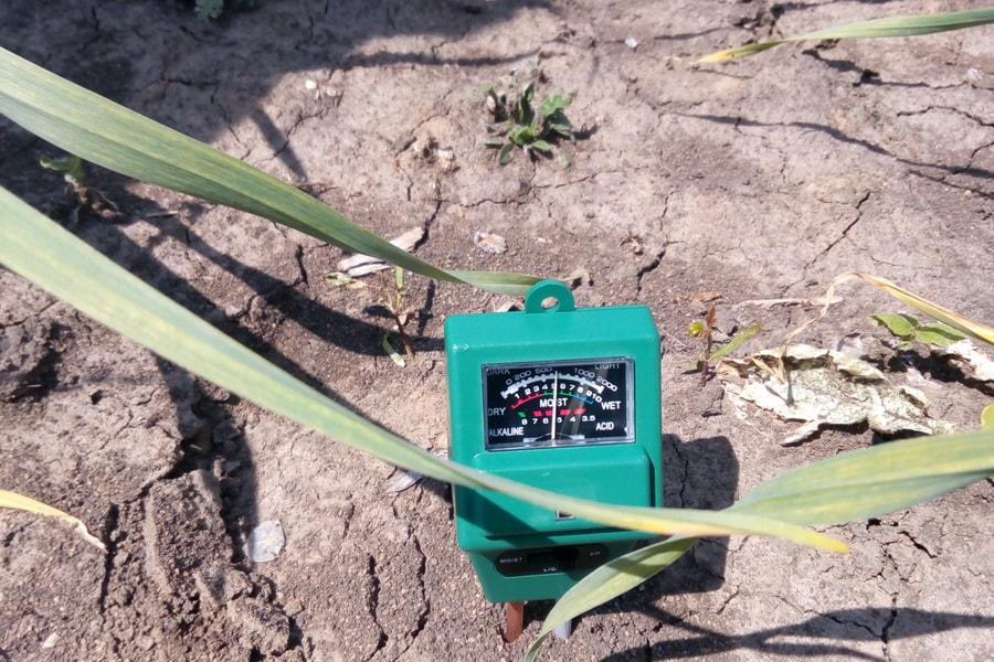 проверка уровня кислотности почвы на поле чеснока прибором на поле компании УкрАп (UkrUP)
