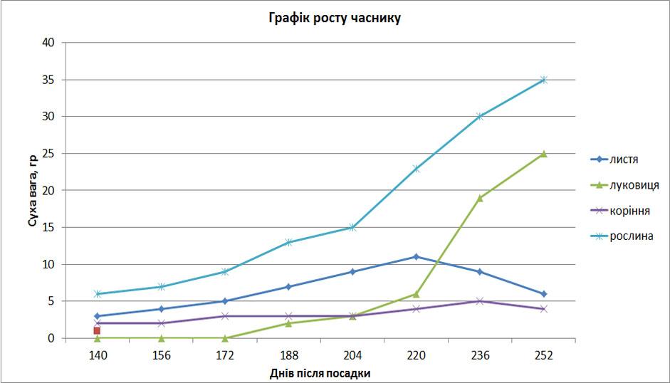 график роста чеснока