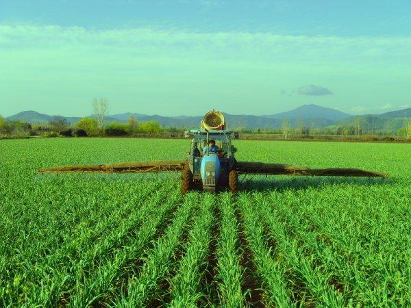 трактор с опрыскивателем вносит гербициды для чеснока на поле