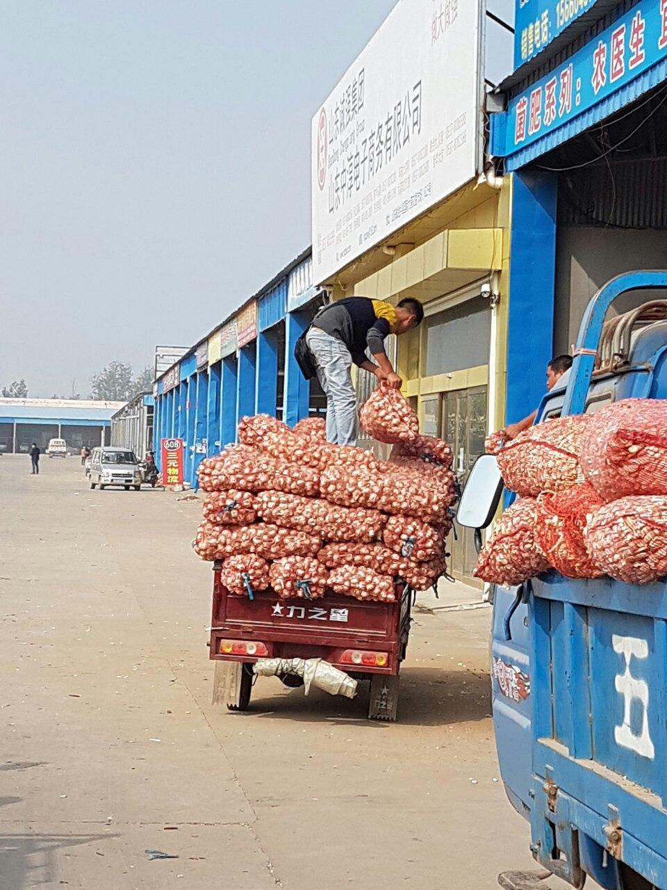 вантажівка з часником їде на китайський ринок часнику в Китаї, Шандунь, Цзиньсян
