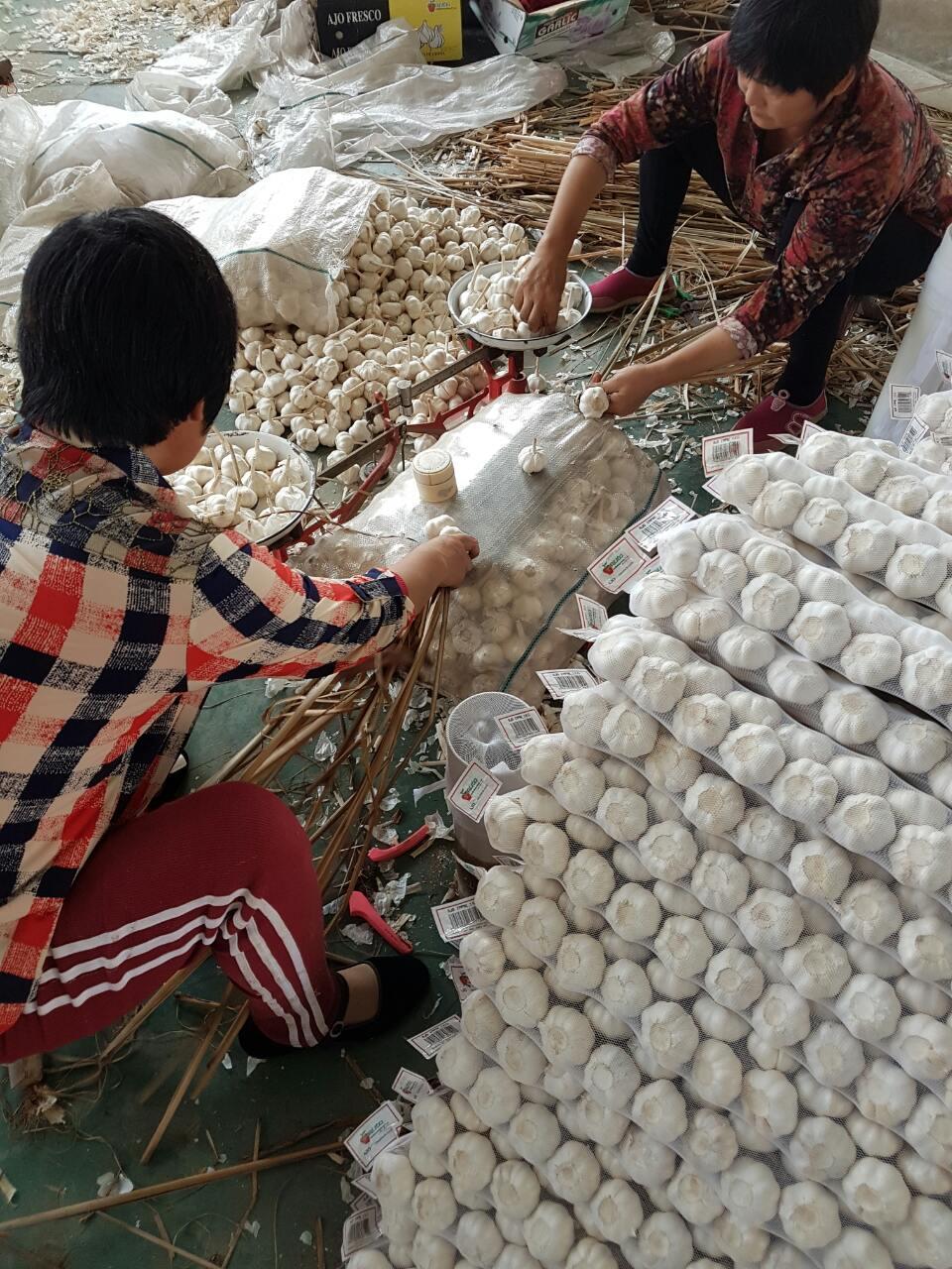 женщины заплетают чеснок в косички на китайском рынке