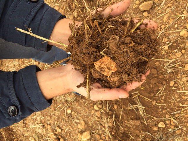 Почва в Испании в которую сажают чеснок