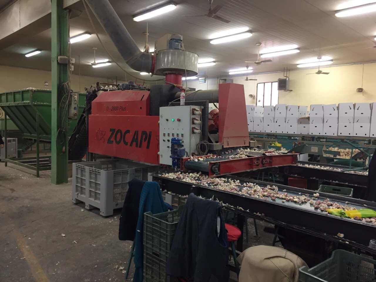 машина для разлущивания (разделения) чеснока на зубки испанской фирмы Zocapi