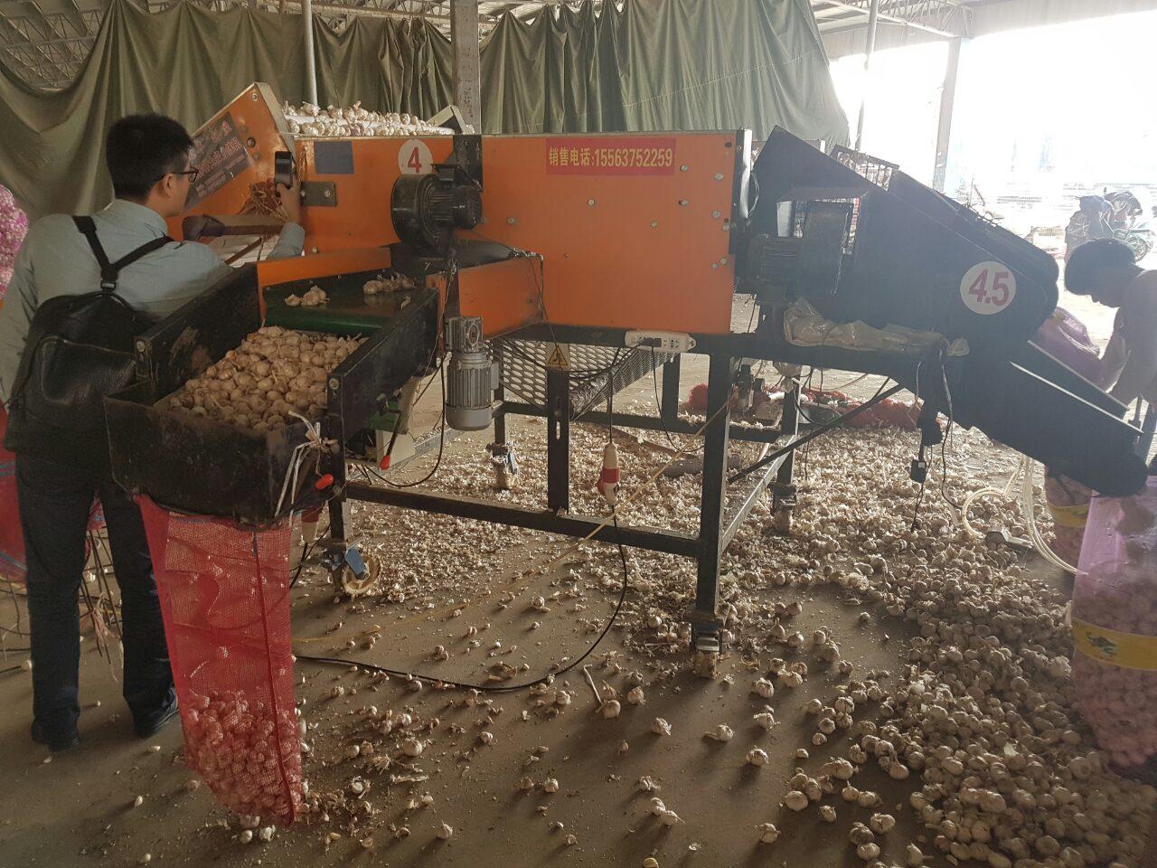 калибровка чеснока на рынке в Китае