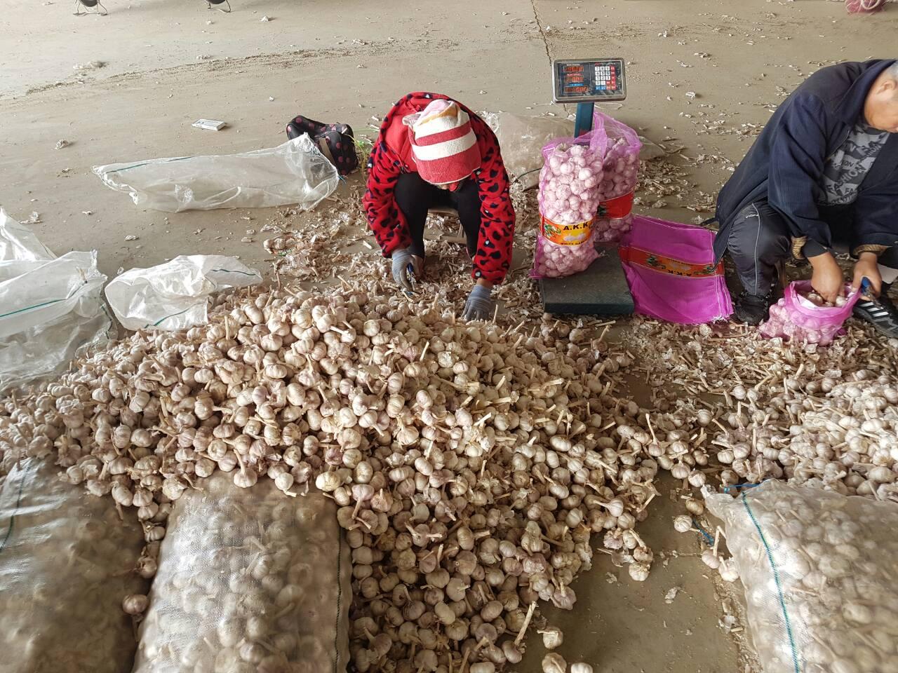 женщины обрезают стебли чеснока на рынке Цзиньсян в Китае