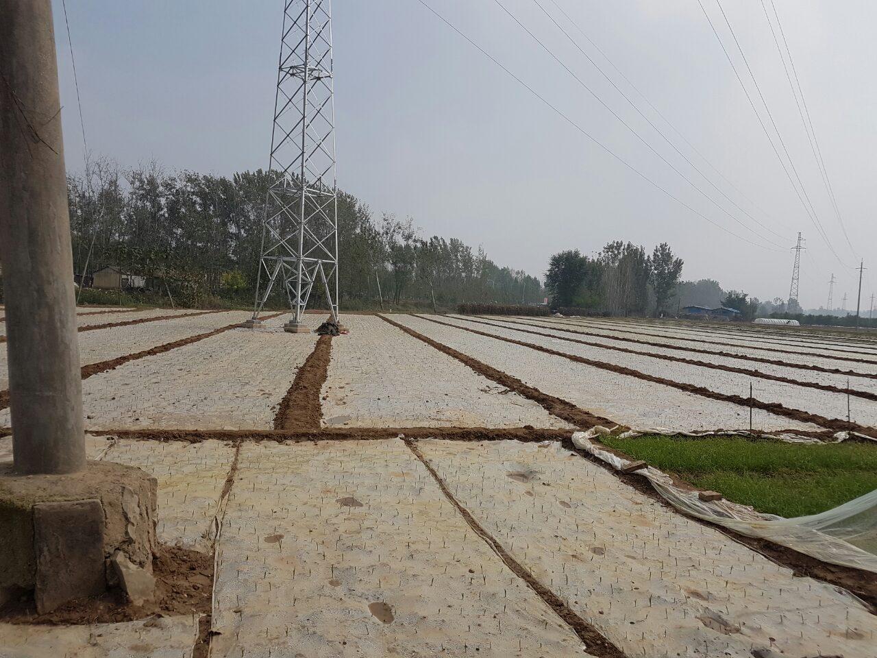 поле чеснока в китае, накрытое пленкой
