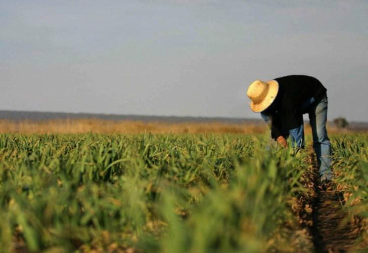 фермер на поле чеснока в Аргентине